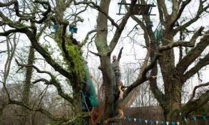 Stop the cuts … the 'Combe Haven Defenders' set up camp in the treetops to protest against a new link road between Bexhill and Hastings that will carve through countryside. Photograph: David Levene
