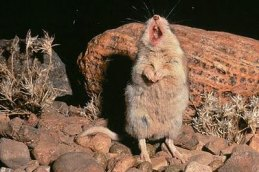 There is just something right about a world that contains a scorpion munching mouse that howls at the moon.