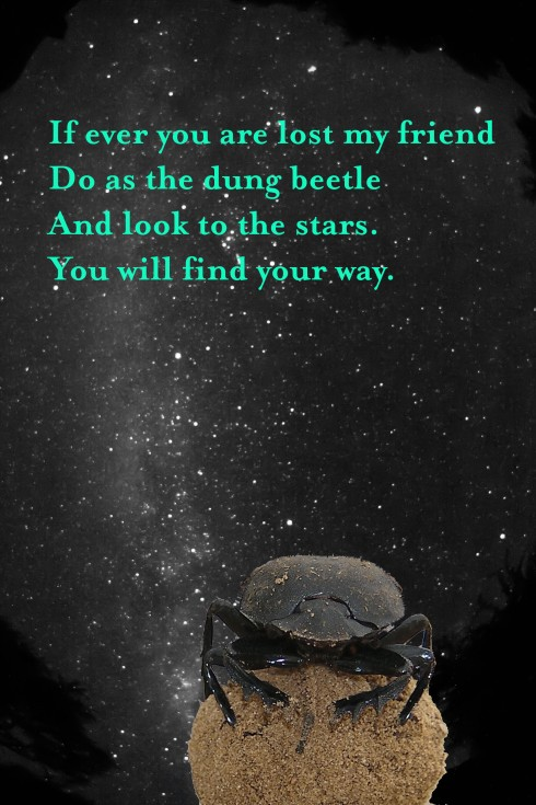 Beetle + Milky Way by Emily Baird (Text added)