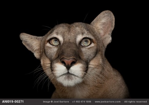 photo by Joel Sartore: http://www.joelsartore.com/