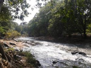 The Moyar River in the Sathyamangalam reserve forest.