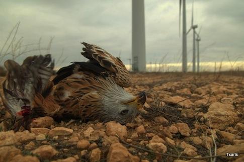dead-bird-eastcountymagazine.org_