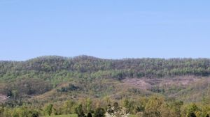Photo provided by the University of Tennessee shows Wilson Mountain in the Cumberland Forest, a state-owned research area used by the University of Tennessee.