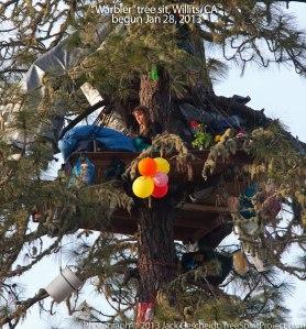 Warbler_treesit_9045_1000p_WEB