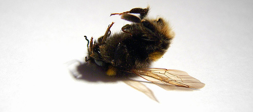 If You Think This Bee News Is Strange Be Sure To Check Out Recent Article From The Newswire Anarchist Beekeepers Claim Responsibility For US Drone