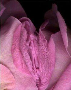 vagina-flower