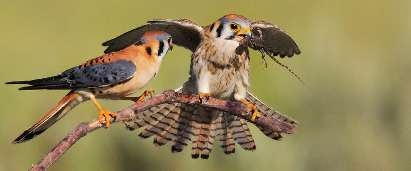 Stress From Human Activity Causes Birds to Abandon Nests ...