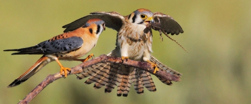 BirdsAbandonNests