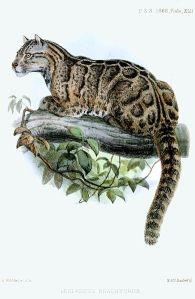 formosan-clouded-leopard-joseph-wolf