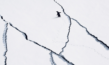 Penguin on Antarctic sea ice. Photograph: John B. Weller