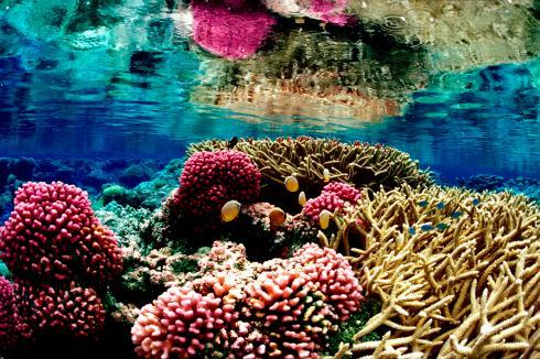 Coral_Reef_at Palmyra_Atoll_National_Wildlife_Refuge_Jim_Maragos_USFWS_Pacific_FPWC