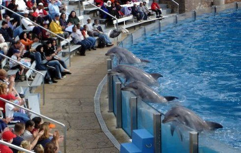 dolphin_show.jpg.492x0_q85_crop-smart