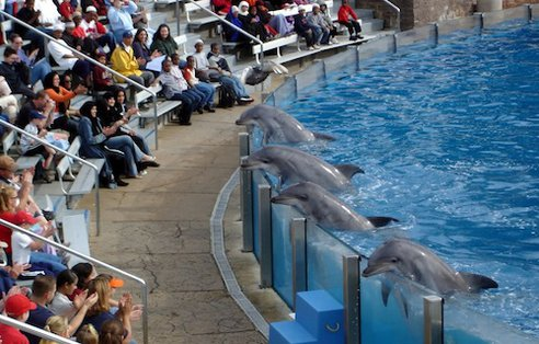 India Bans Captive Dolphin Shows, Says Dolphins Should Be Seen as 'Non-Human Persons' Dolphin_show-492x0_q85_crop-smart