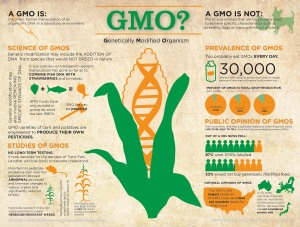 gmo-genetically-modified-organism_50290d5e92a11