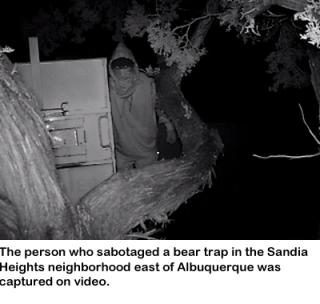 bearhuntSaboteur