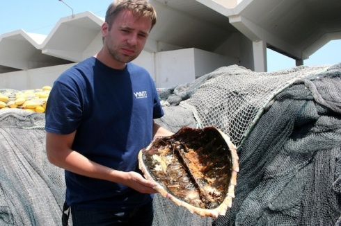 The shell of a sea turtle, one of the world's most protected species, found in Tunisia.