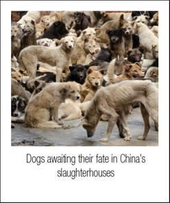 dogmeat2