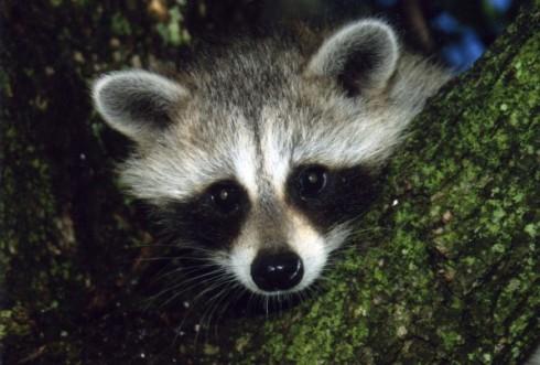 Orphaned Wildlife Alabama.JPEG-06499